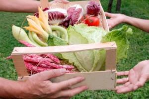 basket-of-vegetables2