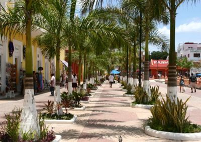 Cozumel Palm Lined Street