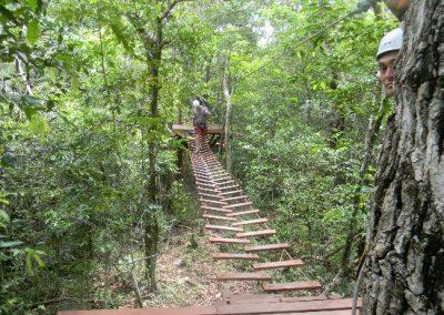 Selva Maya No Hands Rope Bridge